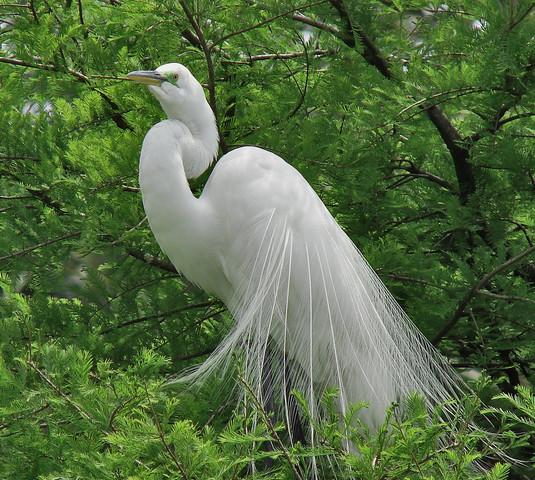 Beautiful Nature Image: Natural Beuaty « Literal Beauty